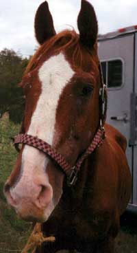 Triple 8's upon seizure by the PA State Police at the Parsonville Horse Auction in October 2002. Donations are needed to cover his medical expenses and care during the 4 months he was held as evidence in a criminal investigation.