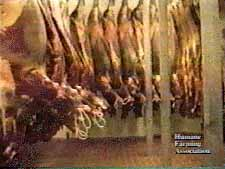 Horse carcasses hanging.