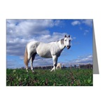 Grey horse notecard