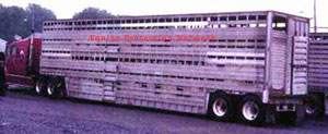 Double deck trailer used to transport horses to slaughter in violation of NY law
