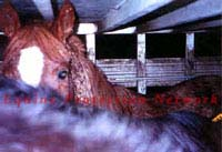 Horse inside double deck trailer has 3 inch I beams between his ears.