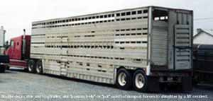 This is a double deck trailer used to transport horses to slaughter. The truck is a conventional with a sleeper. This IS a double decker cattle and hog trailer, also known as a 'possum belly or 'pot'.