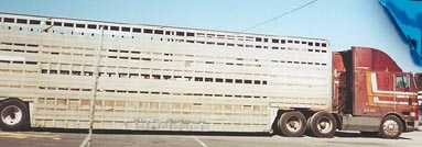 This is a double deck trailer used to transport horses to slaughter. The truck is a brown International cabover with a sleeper. This IS a double decker cattle and hog trailer, also known as a 'possum belly or 'pot'.