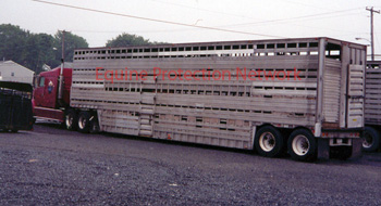 Double deck trailer used to transport horses to slaughter