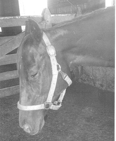 The expression on this mare's face tells the entire story. She is in excruciating pain.