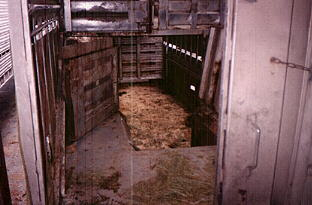 View from the rear door into the rear section of a double deck trailer. This section is refered to as the 'doghouse'. The opening in the wall lead to the lower deck. Horses jump down into the bottom tier of the double cattle trailer.