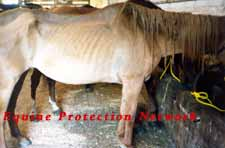 Emaciated horse is sold in violation of PA law.